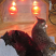 Cats love the infrared light