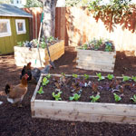 3'x4' Cedar Raised Garden Bed Kit