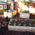 Garden beds in the urban farm
