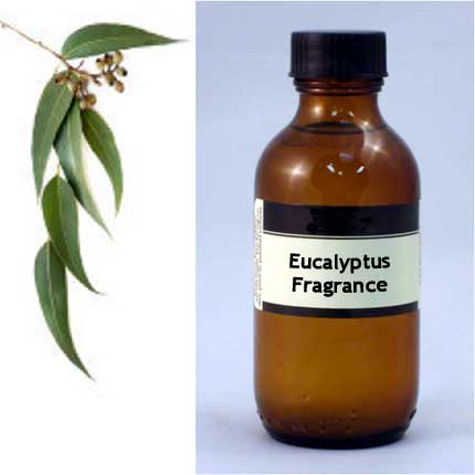 Sauna/Steam Eucalyptus Fragrance, 100mL