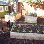 3'x4' Cedar Raised Garden Bed Kit